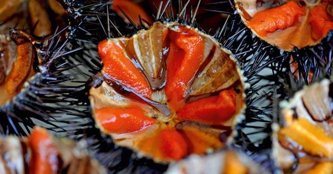 ricci frutti di mare gallipoli